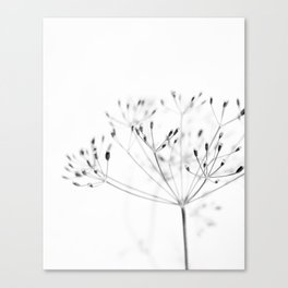 Dill Sprouts / Nature Photography Canvas Print