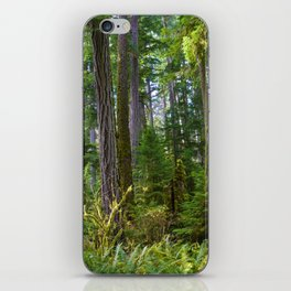 Cathedral Grove, Vancouver Island BC iPhone Skin