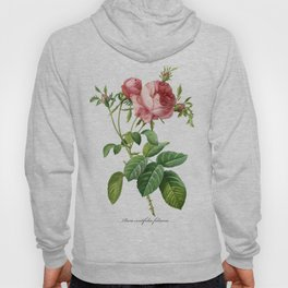 Vintage Rose - Redoute's Rosa Centifolia Foliacea Hoody