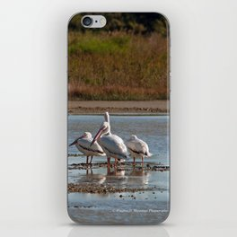 The Birds of Cutler Bay Wetlands iPhone Skin
