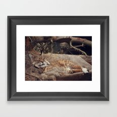 bobcat Framed Art Print