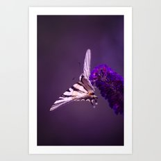 Purple Butterfly Art Print