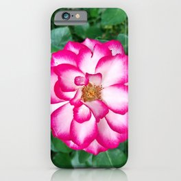 French Rose (2019) from Roberta Winters Photography iPhone Case