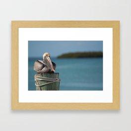 Pelican perching in Islamorada, Florida Framed Art Print