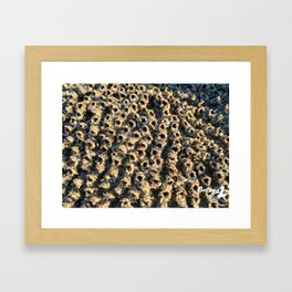 Barnacle City Framed Art Print
