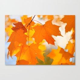 Yellow-orange Autumn Canvas Print