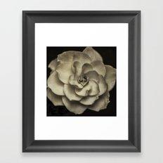 Vintage B/W Gardenia Framed Art Print