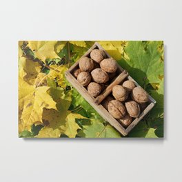Fall still life italian walnuts fruit in wooden basket Metal Print