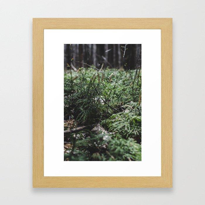 Softly lit ferns Framed Art Print