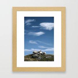 5 Sheep Framed Art Print