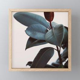 Night Ficus #1 Framed Mini Art Print
