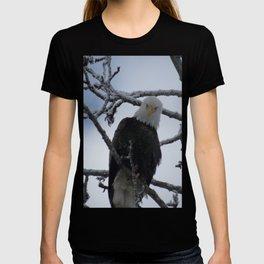 Bald Eagle at 12 Below -- Soldotna, Alaska T-shirt