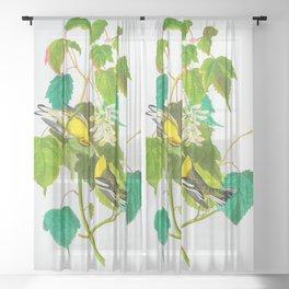 Hemlock Warbler Bird Sheer Curtain