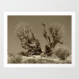 gnarled tree Art Print