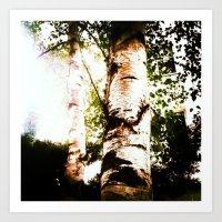 birch Art Prints featuring birch by Eva Lesko
