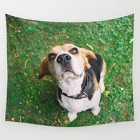 beagle Wall Tapestries featuring Beagle II by Renata's Photobox