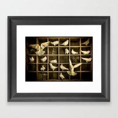 Pigeon Holed Framed Art Print