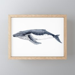 Humpback whale (Megaptera novaeangliae) Framed Mini Art Print