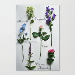 Botanical photography, summer flowers Canvas Print