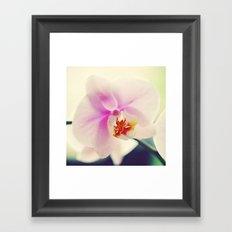Orchid pillow Framed Art Print