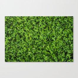 Trifolium Canvas Print