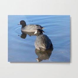 Ducks on Lake Metal Print