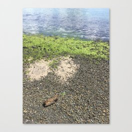 Coastal Algae Canvas Print