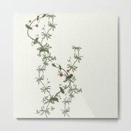 Pimpernel climbs Metal Print
