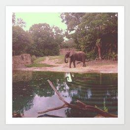 Elephant Sanctuary  Art Print