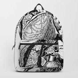 Better or the inside Backpack