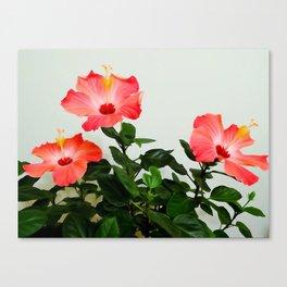 Pink Hibiscus Trio WC Canvas Print