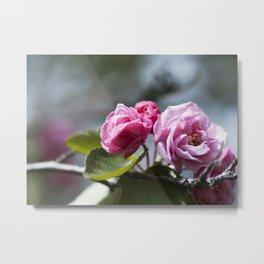 Springtime Pink Metal Print