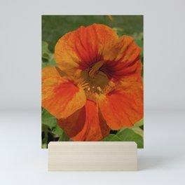 Glorious Nasturtium Mini Art Print