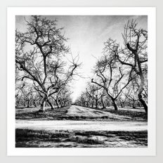 Spooky Row of Trees Art Print