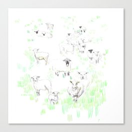 More sheeps Canvas Print