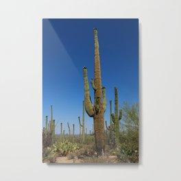 In The Sonoran Desert Metal Print