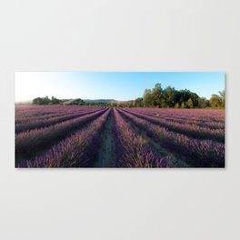 Bonneiux over the Lavender Field Canvas Print