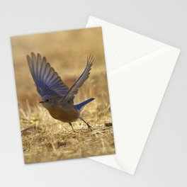 Bluebird Preparing for Flight by Reay of Light Photography Stationery Cards