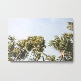 LOW-ANGLE PHOTOGRAPHY OF GREEN COCONUT TREES UNDER WHITE SKY DURING DAYTIME Metal Print