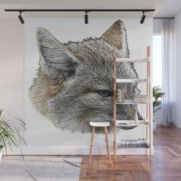 baby fox grey Wall Mural