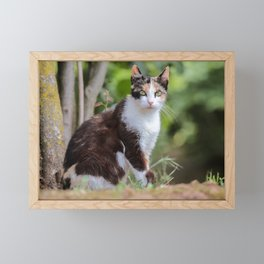 Are you meowing to me? Framed Mini Art Print