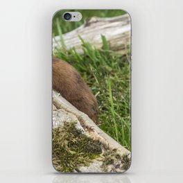 Weasel. iPhone Skin