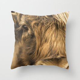 Highland cow close-up scottish eye Throw Pillow