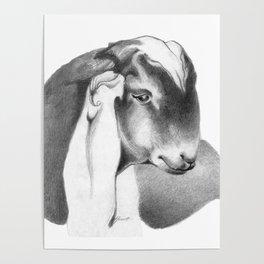 Anglo Nubian Buck Kid 2 Poster