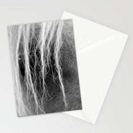Palomino in Black and White Stationery Cards