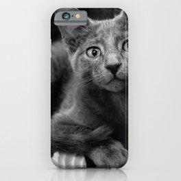 Russian Blue Kitten Portrait iPhone Case