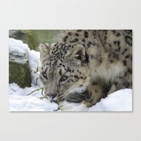 snow leopard Canvas Prints featuring Snow Leopard by PICSL8