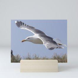 Seagull in flight Mini Art Print