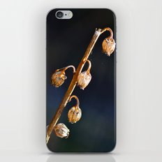 Seed Pods iPhone & iPod Skin