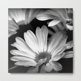 Black and White Daisy Square Metal Print